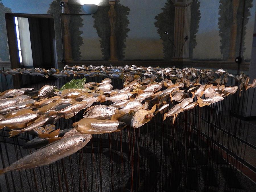 museo-di-storia-innaturale-sala-xiii-pesci-e-anfibi-01-900px