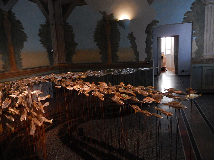 museo-di-storia-innaturale-sala-xiii-pesci-e-anfibi-02-900px