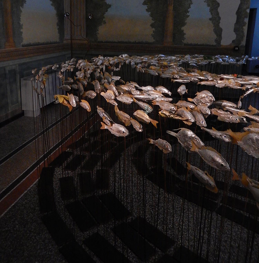 museo-di-storia-innaturale-sala-xiii-pesci-e-anfibi-03-900px