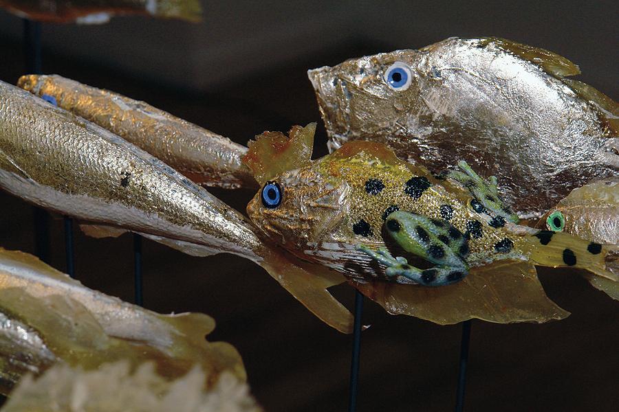 museo-di-storia-innaturale-sala-xiii-pesci-e-anfibi-05-900px
