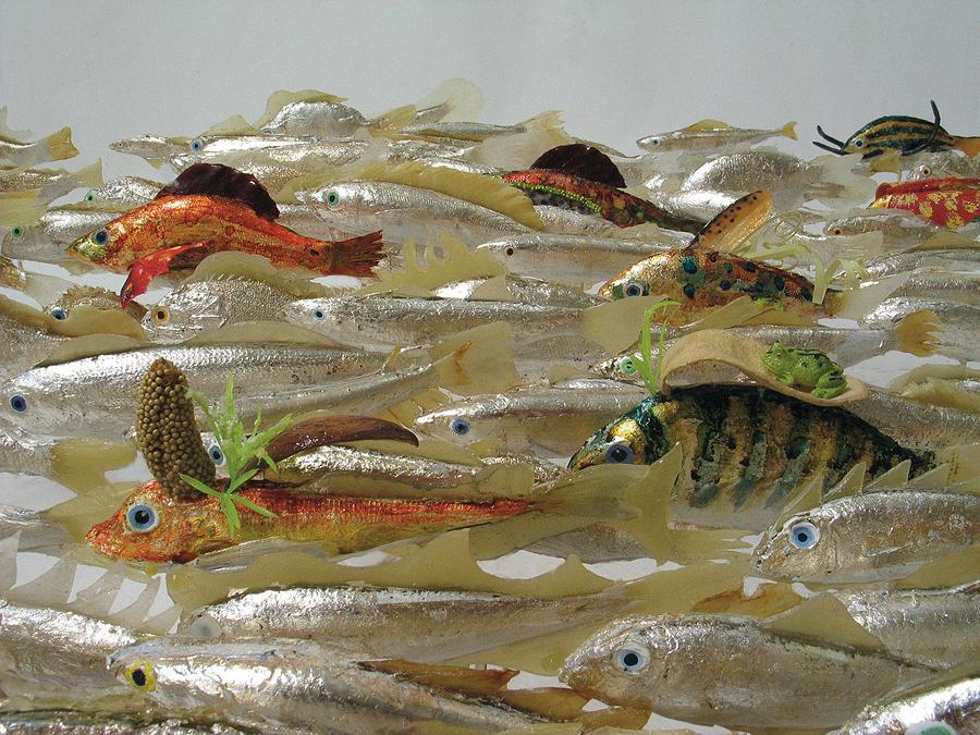 museo-di-storia-innaturale-sala-xiii-pesci-e-anfibi-06-900px