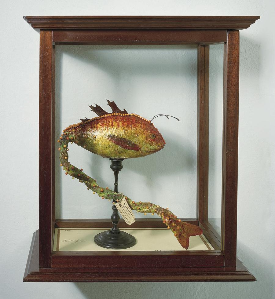 museo-di-storia-innaturale-sala-xiii-pesci-e-anfibi-fulgens-rubra-rudentis-foemina-900px