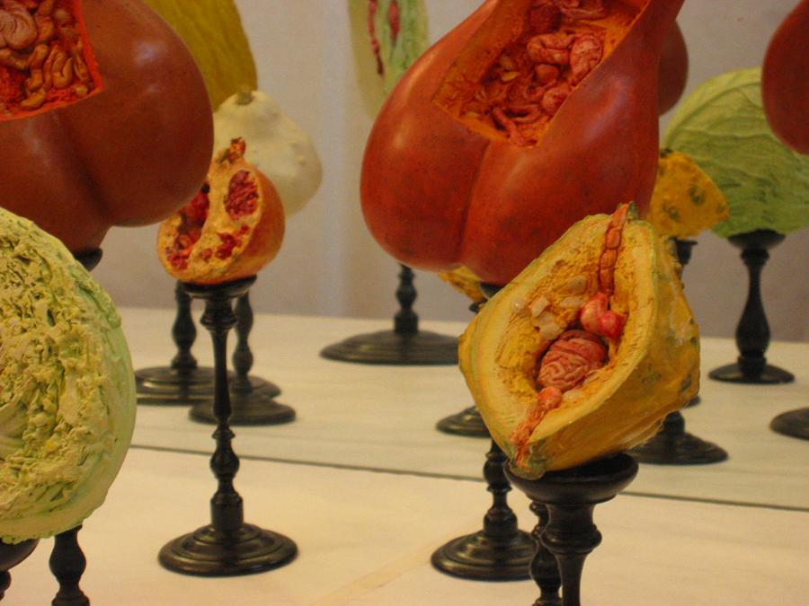 museo-di-storia-innaturale-sala-viii-botanica-organica-02-900