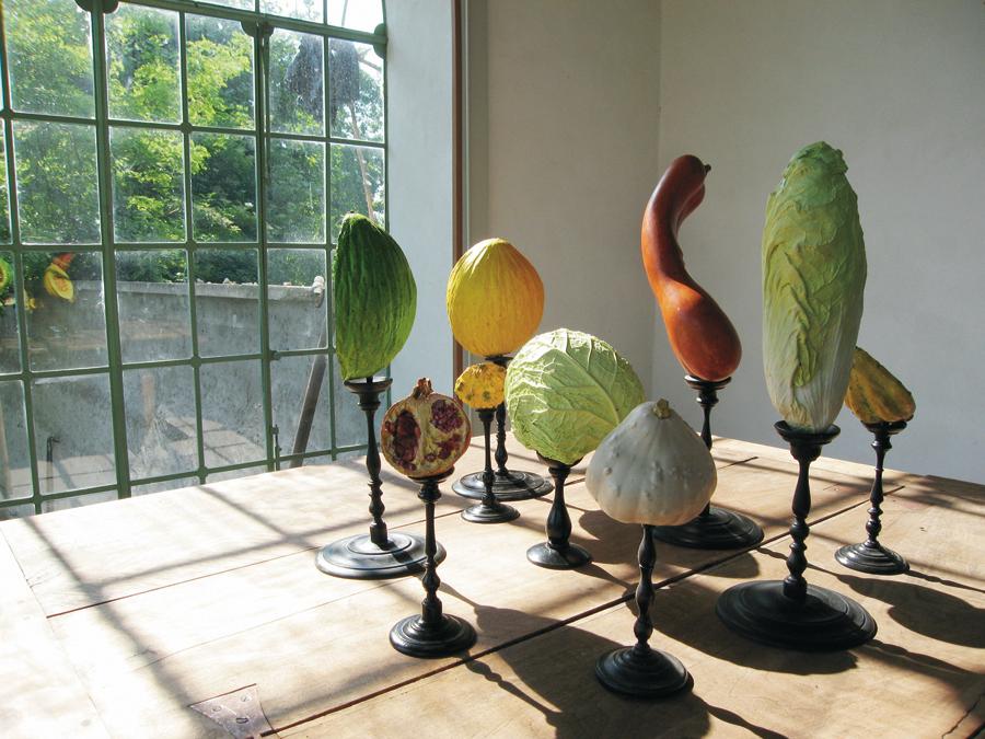 museo-di-storia-innaturale-sala-viii-botanica-organica-03-900
