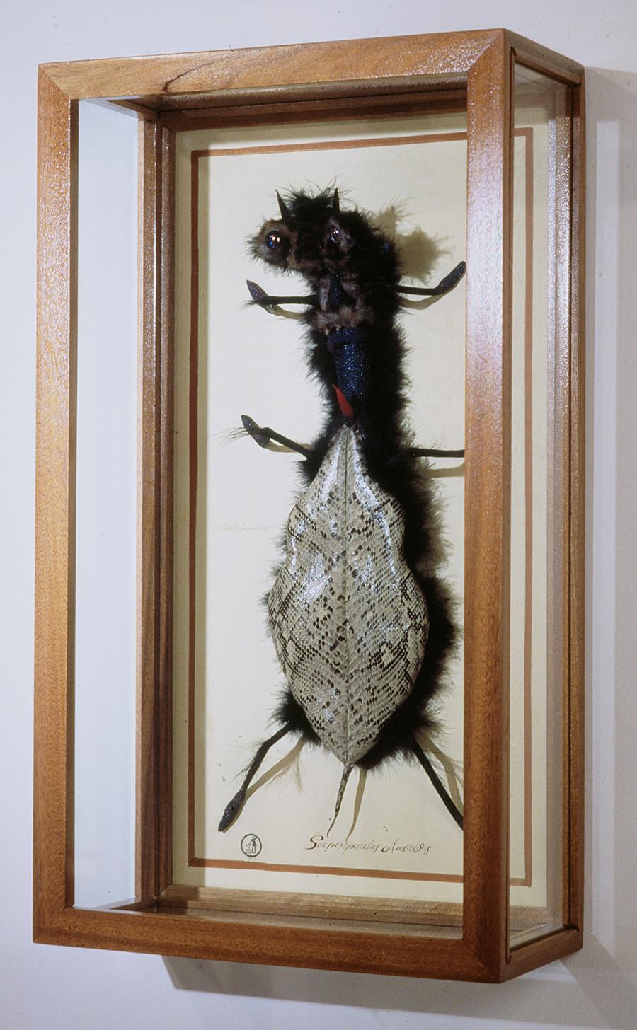 Serpenpardus Amorosus