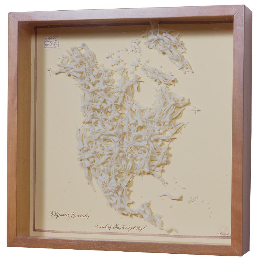 HESPERIA BOREALIS / 50 x 50 x 11 cm