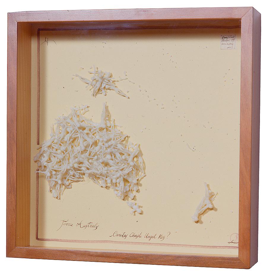TERRA AUSTRALIS / 50 x 50 x 11 cm