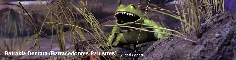 Batrakia Dentata (Batracedontes Palustres)
