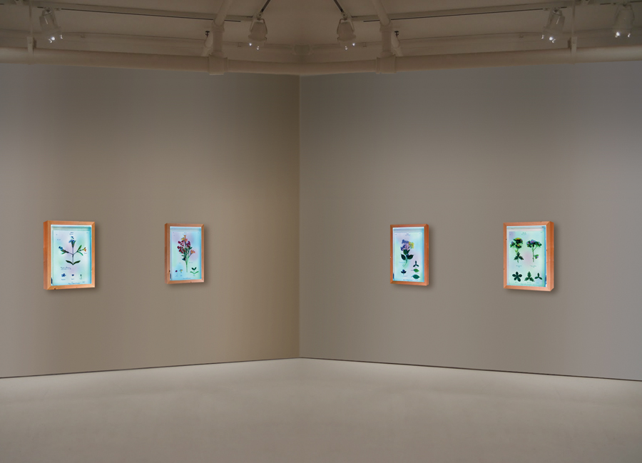 DARIO GHIBAUDO - MUSEO DI STORIA INNATURALE